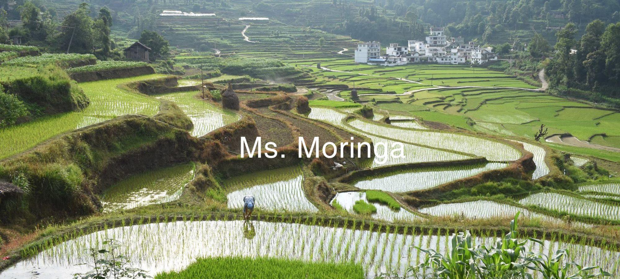 MS.MORINGA